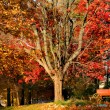 Autumn trees — Stockfoto #8154749