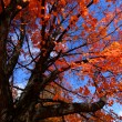 Autumn trees — Stock Photo #8154902