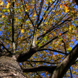 Autumn trees — Stock Photo #8154955