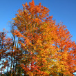 Autumn trees — Stock Photo #8155313