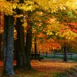 Autumn trees — Stock Photo #8155336