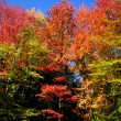 Colorful Autumn trees — Stock Photo #8159147