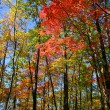 Colorful Autumn trees — Stock Photo #8159152