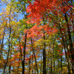 Colorful Autumn trees — Stock Photo