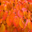 Autumn leaf background — Stock Photo