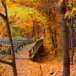 Stock Photo: Board walk in autumn landscape