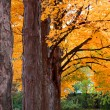 Row of autumn trees - Stock Photo