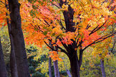 Bright colored trees — Стоковое фото