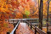 Paisagem de outono — Foto Stock