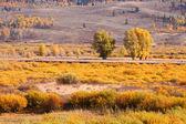Podzimní krajina ve wyomingu — Stock fotografie