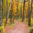 Autumn Walk Way — Stock Photo