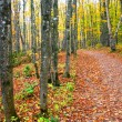 Walkway Through Autumn Trees — Stock Photo