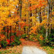 Stock Photo: Road Through Autumn Trees