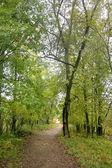 Cesta pěšky lesem — Stock fotografie