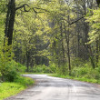 Stock Photo: Winding road through forest