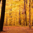 Bright Autumn Trees — Stockfoto #8486889
