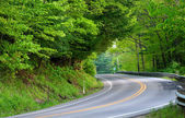 High way through forest — Stock Photo