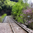 Train track through forest — Stock Photo #8494752