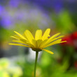 Single Yellow Flower — Stock Photo