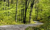 Estrada panorâmica — Fotografia Stock