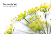 Yellow flower on white background — Stock Photo