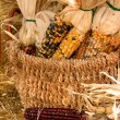 Harvest — Stock Photo #8622517