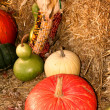 Autumn harvest — Stock Photo #8622536