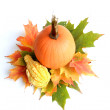Pumpkin Arrangement — Stock Photo #8646803