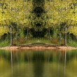 Tree Reflections — Stock Photo #8696002