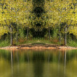 Tree Reflections — Stock Photo