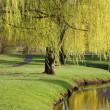 Willow Trees - Stock Photo