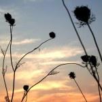Sun Set Time — Stock Photo