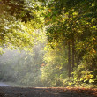 Stock Photo: Morning Sun Ligh In Forest