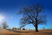 Bright Winter Day — Stock Photo