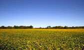 Yellow and green colored farm in Michigan — Stock Photo