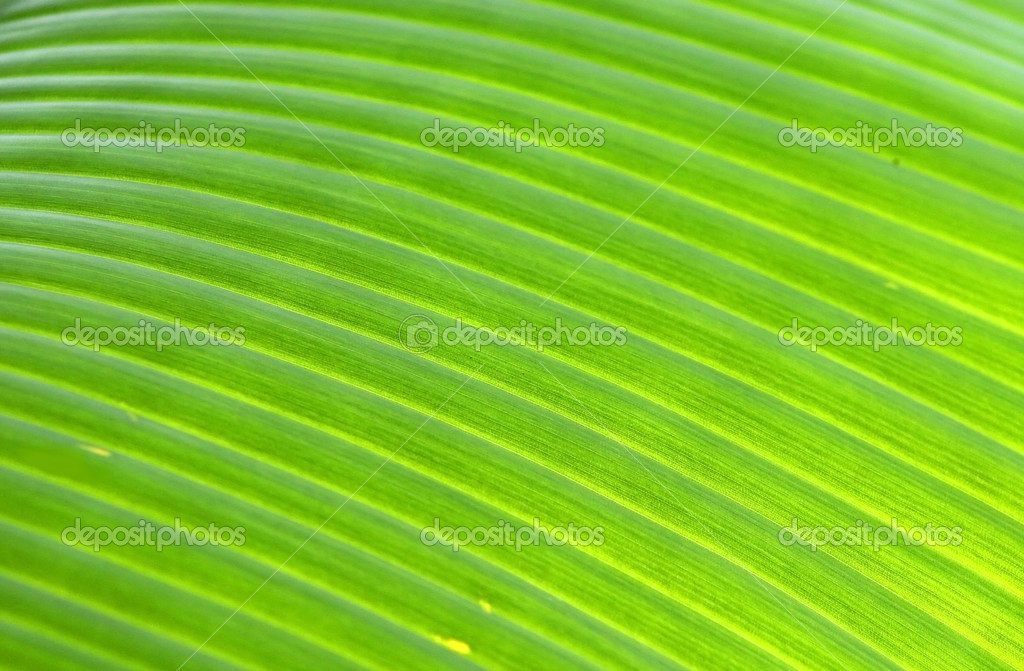 Bright banana leaf close up shot good for background use — Stock Photo #8860351