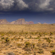 Desert landscape in Arizona — Stock Photo