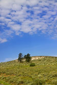 Trees on the hill — Stock Photo