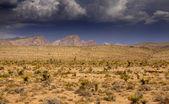 Desert landscape in Arizona — Stock Photo