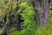 Verde de los árboles en el bosque — Foto de Stock