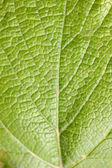 Fundo de folha verde — Fotografia Stock