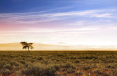 Beautiful morning scene in prairies — Stock Photo