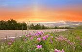 Beautiful evening scene — Stock Photo