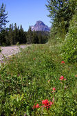 Wild flowers by the road — Stock Photo
