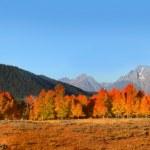 Grand Tetons park in autumn — Stock Photo