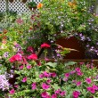 Flowering pots — Stock Photo #9095448