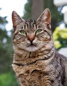 бездомная кошка — Стоковое фото
