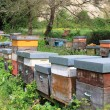 Stock Photo: Apiary