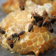 Stock Photo: Bees working on honey cells