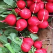 Stock Photo: Fresh radishes